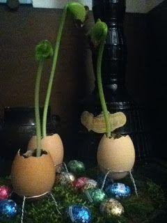 Piantine di fagioli nelle uova