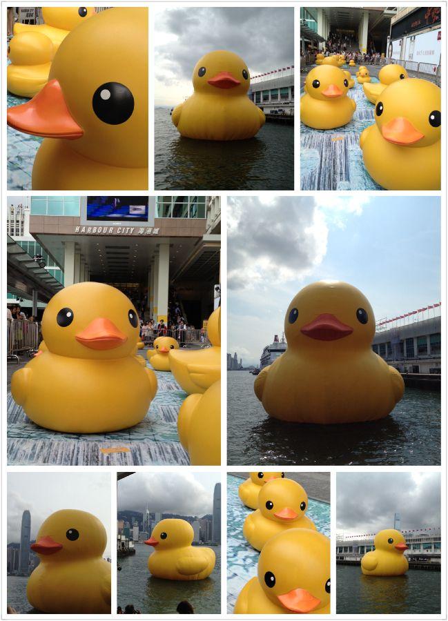 It's all about rubber duck !!!! app app, app app .......
