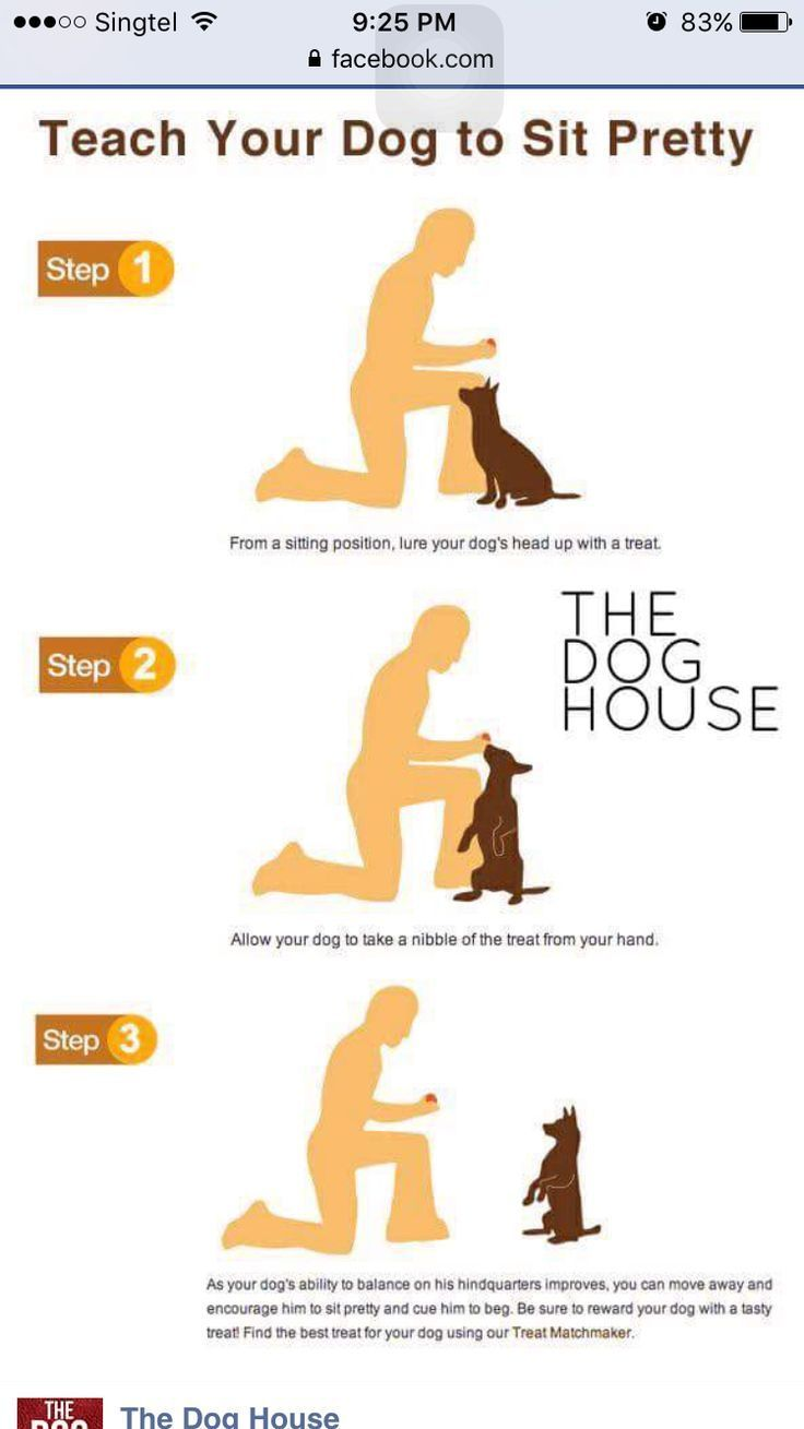Teach Your Dog To Sit Davesdogs Dogtraining Dogtricks Puppy