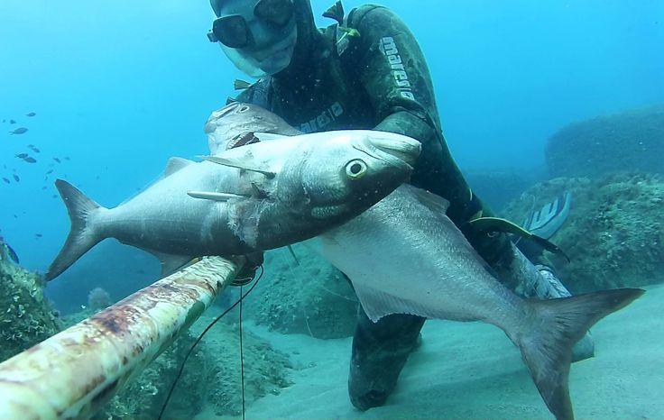 Nitidez en tus fotos debajo del agua con las #cámaras #Drift. #LiveOutsideTheBox!