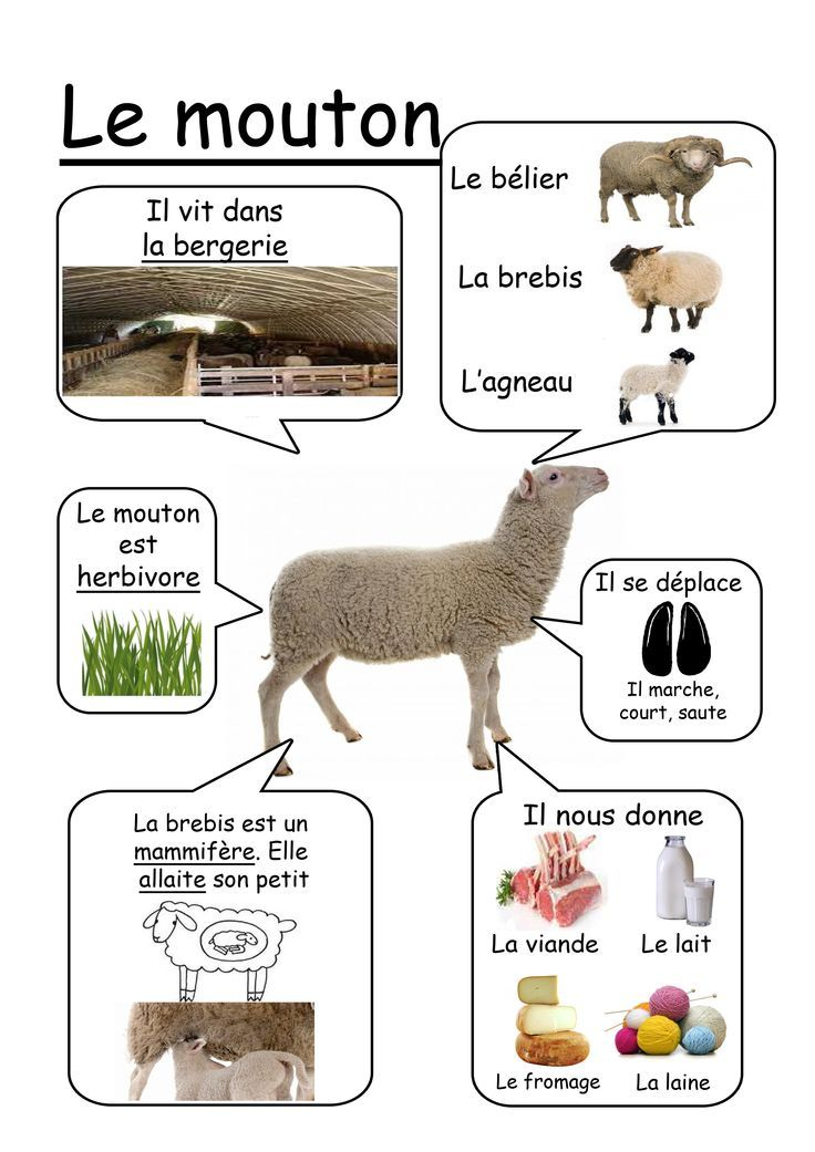 fiche mouton - Recherche Google