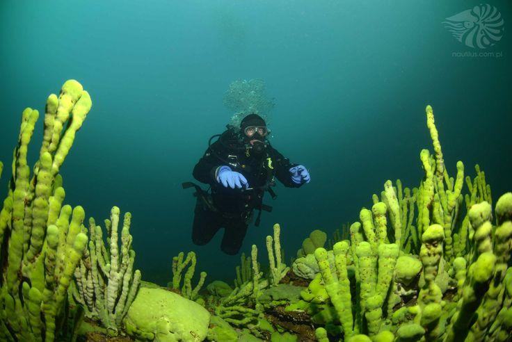 BAJKAL Safari Diving http://d04e8.skroc.pl/
