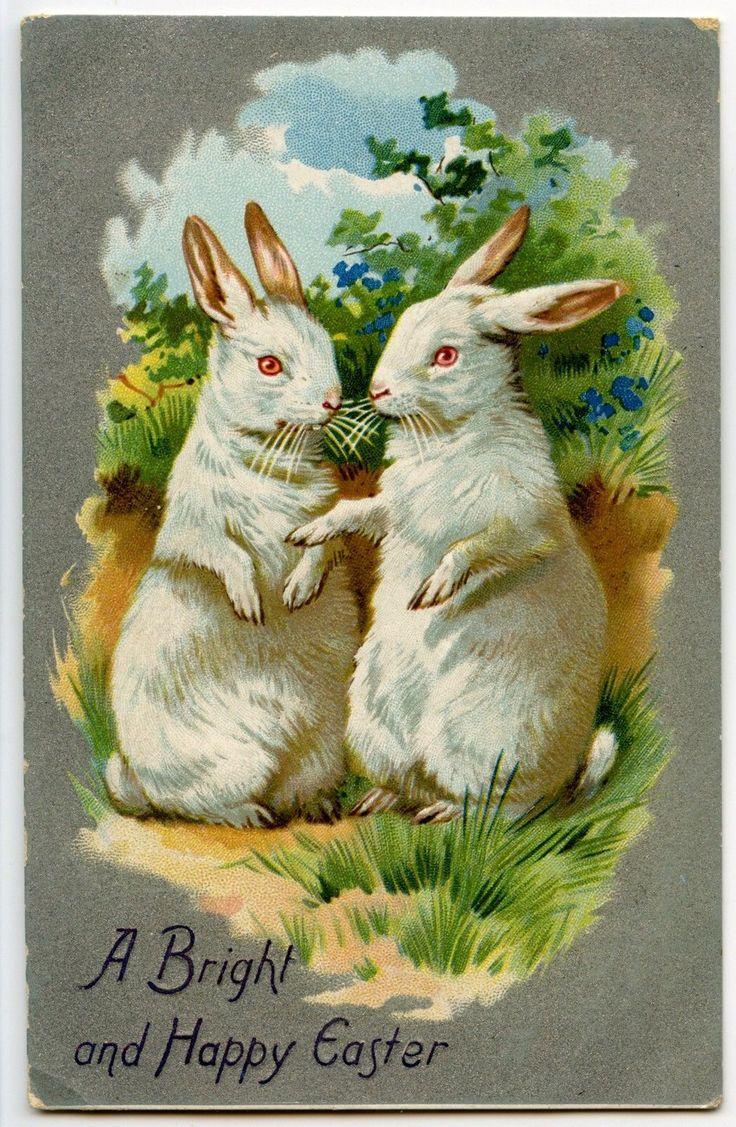 Совятами, открытки с белыми кроликами
