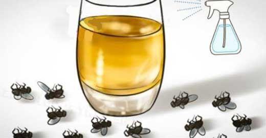 Conoce como puedes eliminar los insectos en tu hogar de por vida con tan solo realizar este método completamente natural