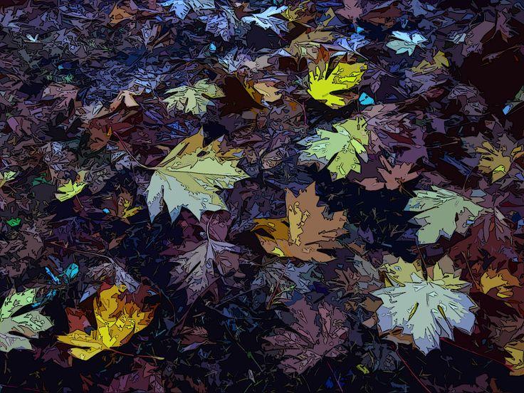 Big Leaf Maple leaves