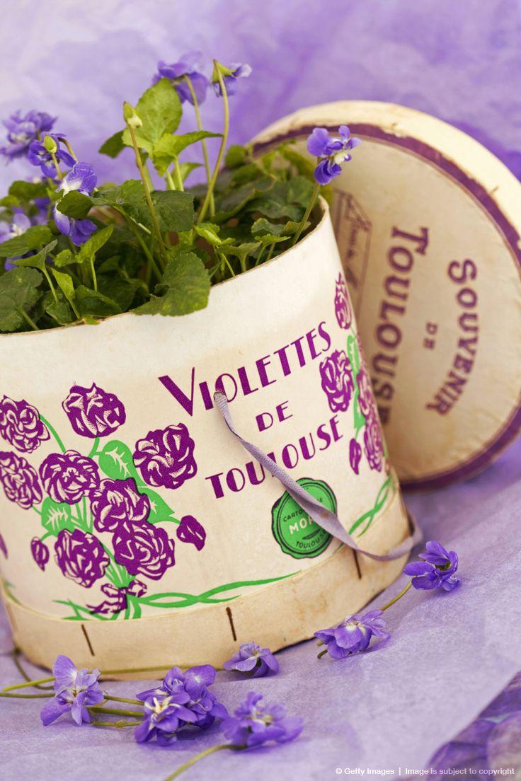 Les 652 meilleures images du tableau violettes de toulouse for Maison violette toulouse