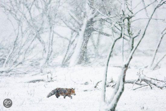 De Nieuwe Wildernis #Fox #Winter