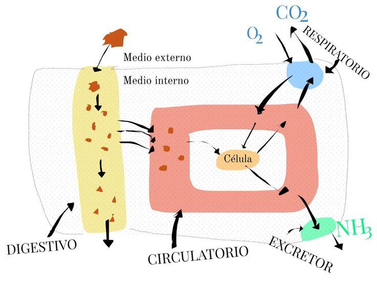 Mejores 21 imágenes de Dibujos para Biología-Geología en Pinterest ...