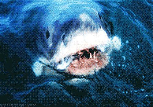 New trending GIF tagged shark jaws shark week via Giphy...