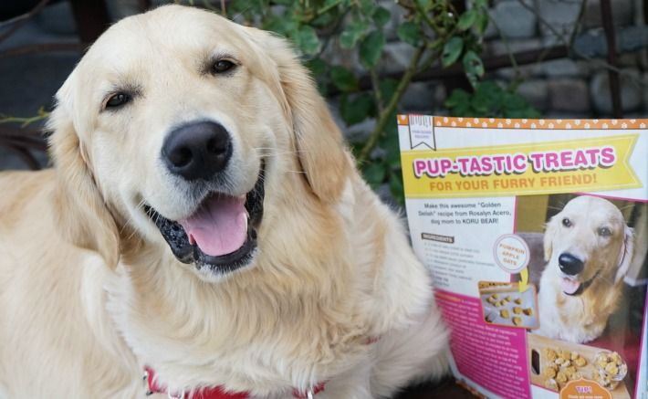 Koru Bear Featured In Bake It Up Dogs Retriever Dog Dogs Puppies