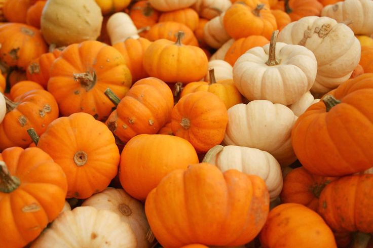 The season of fall generously rolls out the red carpet to pumpkins every year, as it should, because pumpkins are a monumental sign that fall is here. However, pumpkins are not just for carving; they have endless health benefits; pumpkin does wonders for your skin, and tasting delicious is just an added bonus!This low calorie, nutrient infused beauty packs a punch when it comes to being healthy. One cup of pumpkin has 30 calories, 1 gram of fiber, and 8 carbohydrates. It is loaded with…