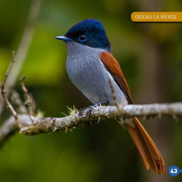 Multi Colored Bird!
