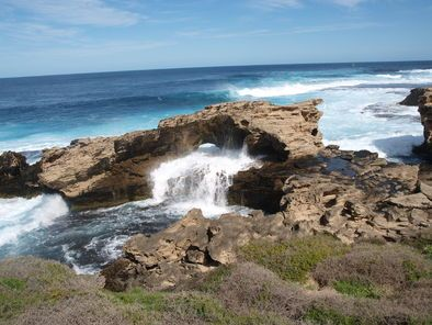 Rottnest Island Tour from Perth or Fremantle - Perth   Viator