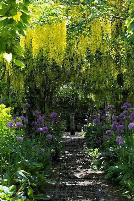 algunas de las plantas para tu area de jardin de ensueño ;-)
