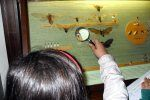 Γνωρίζετε ότι εάν όλα τα έμβια ήταν εκατό, τα ογδόντα θα ήταν έντομα; Γνωρίζετε ότι οι πεταλούδες ανήκουν στα λεπιδόπτερα; Γνωρίζετε εάν η ν...