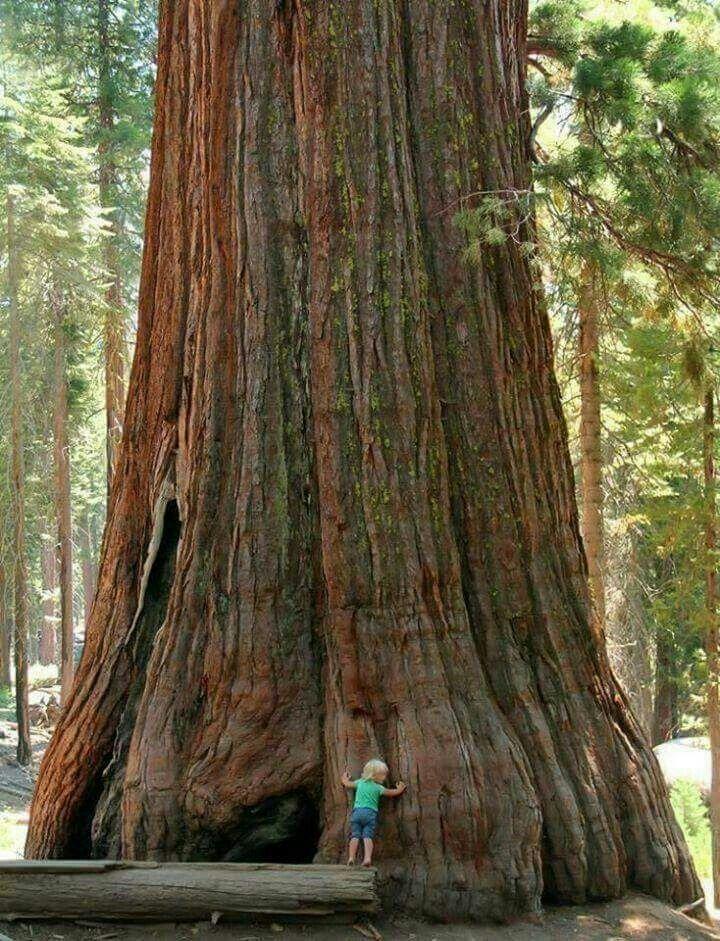 COMPLETE KIT Redwoods Sequoia National Park Needlework
