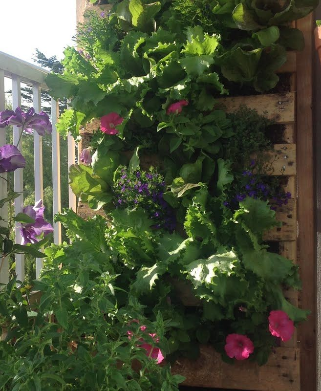 17 Best Images About Pallet Gardens On Pinterest Gardens