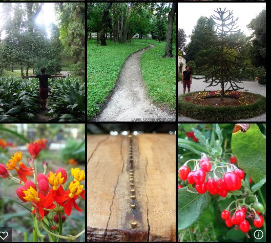 2017 - ORTO BOTANICO - Botanical Garden, in Padova, Via Orto Botanico 15, about 24 miles southeast of Vicenza; open through May 30,  9 a.m.-7 p.m.; June-Sept. 9 a.m.-6 p.m., closed on Mondays; Nov.-March, 9 a.m.- 7 p.m., closed on Mondays;  it's the world's first botanical garden: it opened in Padova in 1545 and it still preserves its original layout; admission: €10; reduced €8, for children aged 6-18;  family  fee: €22.