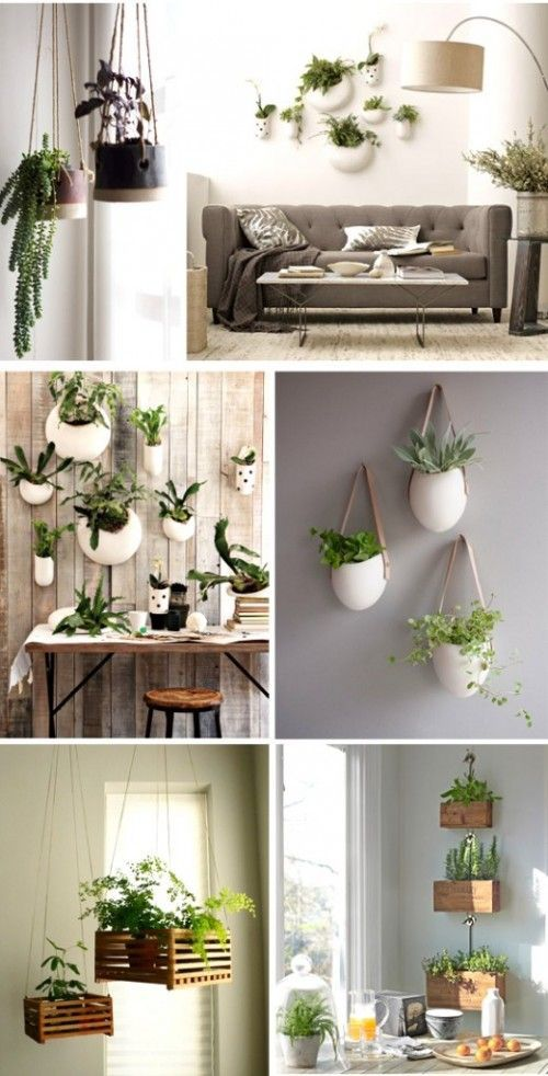 A Touch of Green - Decorating with Plants
