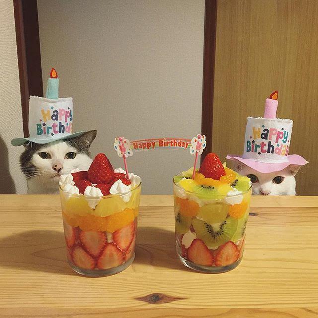 や〜ん❤︎かわいいっ❤︎ 八・おこ『おめでと〜お母はん♡』 今日は、ちゃんとお祝いしてくれたっ♩ ( ※ 誕生日ネタ、これで終了です。お付き合いありがとうございましたん♩) #グラスケーキ #八おこめ #ねこ部 #cat #ねこ #八おこめ食べ物 #誕生日 #八おこめズラ