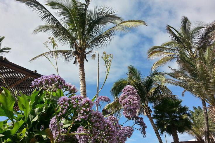 'Der Garten am Pool und der Bar' aus dem Reiseblog 'Über Weihnachten auf den Kanaren: Urlaub im Dorado Beach auf Gran Canaria'