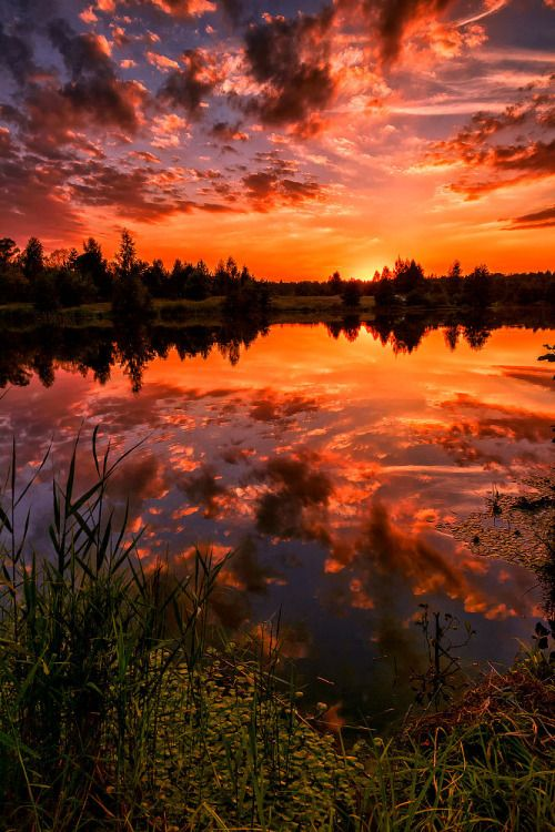 Burning sunset… by Julia Laptev, sunbeams, trees, silhouettes, clouds, beauty…