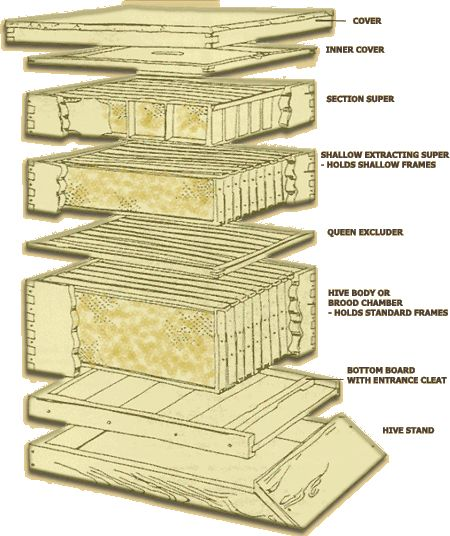 beehive diagram farming gardening pinterest. Black Bedroom Furniture Sets. Home Design Ideas
