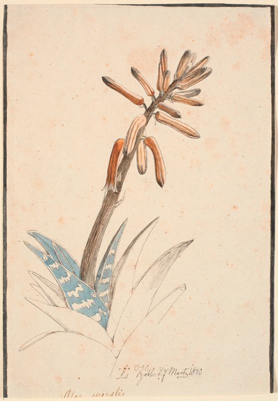 """Johan Thomas Lundbye (1818 -1848), """"Aloe in bloom"""". 1840"""