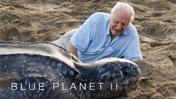 Protecting leatherback turtles - Blue Planet II: Episode 7 Preview - BBC...