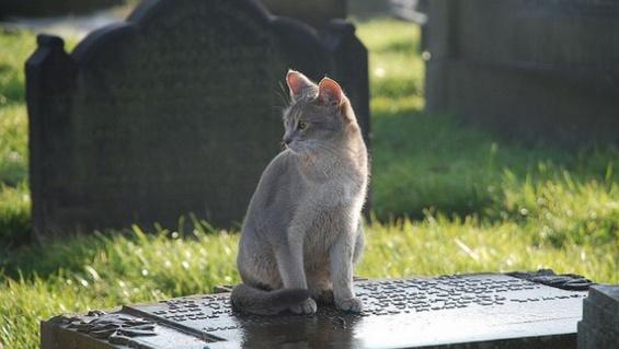 Toldo sobre la tumba de Renzo, su dueño