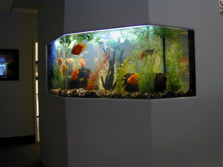 office aquariums. fishtanks placement in wall between waiting room and office aquariums
