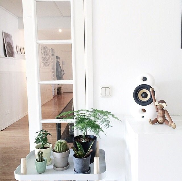 Kaj Boyesen monkey in good company | SmallPod