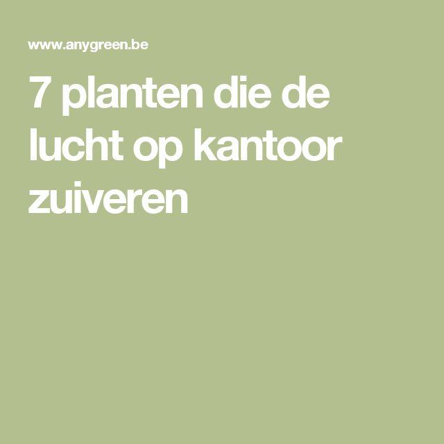7 planten die de lucht op kantoor zuiveren