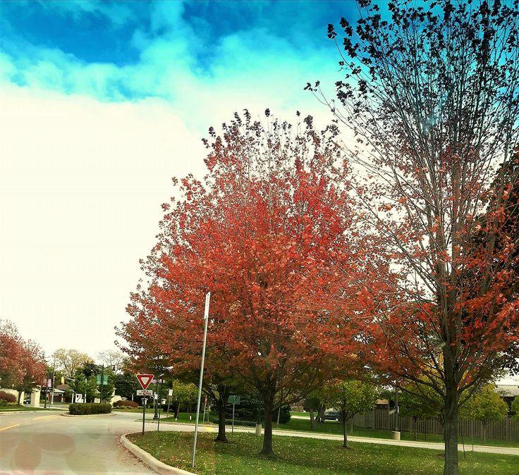 Somewhere around Mohawk College, Hamilton, taken from inside my car