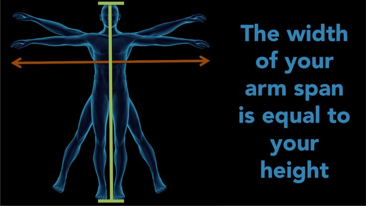 Our Did You Know series is a fun fact of the day spruced up with high quality graphics. Do you know what does the width of your arm span is equal to? http://www.scientificanimations.com/did_you_know/width-arm-span-equal/ #ScientificAnimations #DidYouKnow #ThursdayDidYouKnow #Height