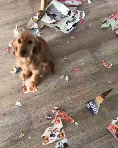 Sweet Animals-Sweet Dog-Sweet dogs puppy-cocker spaniel puppy