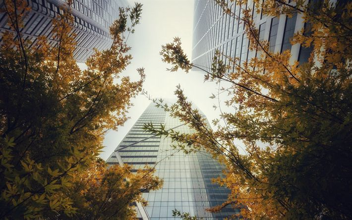 Download wallpapers high-rise buildings, autumn, skyscrapers, bottom view, cityscape, modern architecture