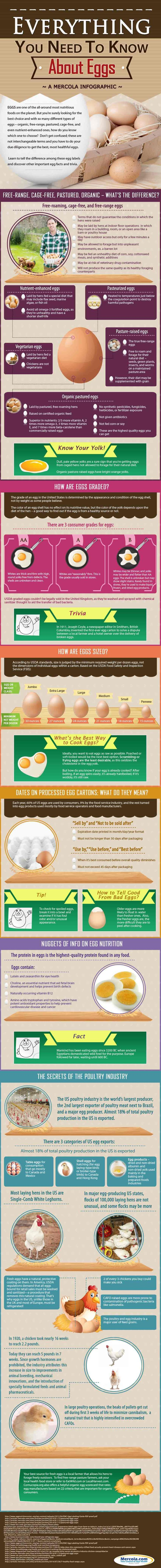 Discover important egg nutrition facts in this infographic, plus other useful tips in choosing safe, high-quality and nutritious eggs for your meals. http://www.mercola.com/infographics/egg-nutrition-facts.htm