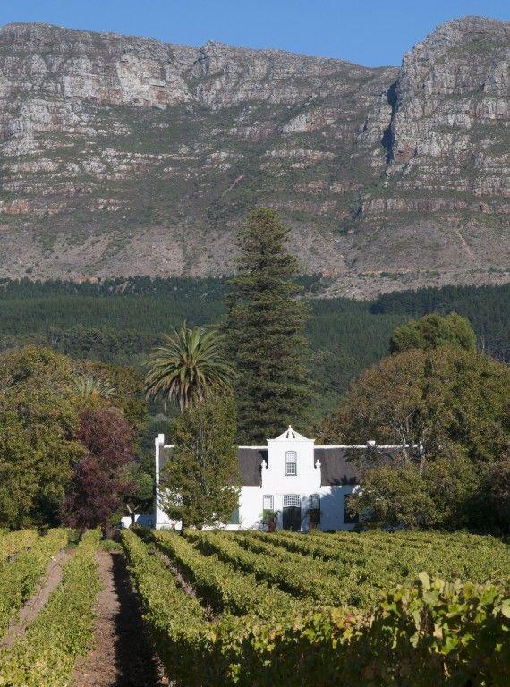 Grape farm, Constantia -- South Africa