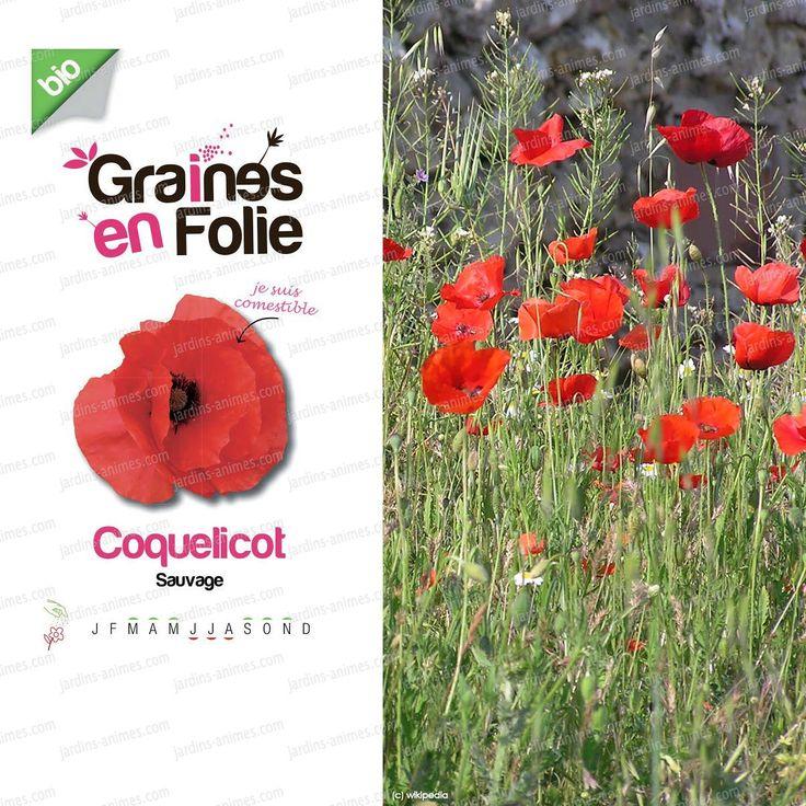Graines de coquelicot sauvage bio Le coquelicot se caractérise par de grandes fleurs de 4 pétales distinctes et enchante par sa couleur rouge intense....