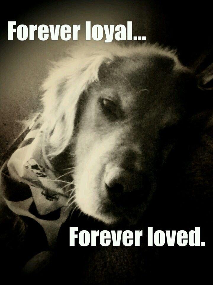 Citaten Over Honden : Beste ideeën over teckel citaten op pinterest