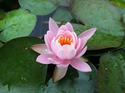 Éclore en conscience: L'omniprésente simplicité  Dès que je crois à mon ...