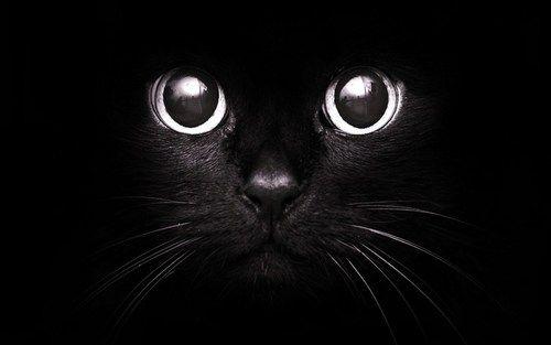 Immagine di cat, black, and eyes