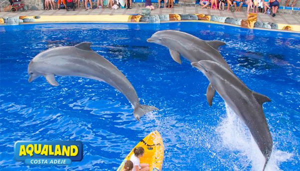Aqualand and Dolphin Shows Costa Adeje | Flights to Tenerife #aqualand #costaadeje #tenerife #dolphins