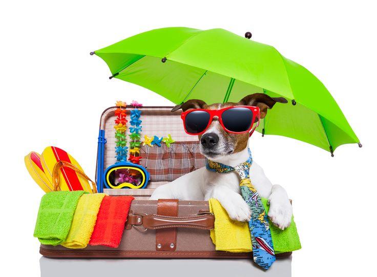 Sommer – Sonne – Sonnenschein Heiße Tage, tropische Nächte – für den Körper ist das eine echt große Herausforderung. Genießen Sie nicht nur den warmen Sonnenstrahl auf Ihrer Haut oder die Auszeit auf der Gartenliege. Denken Sie...