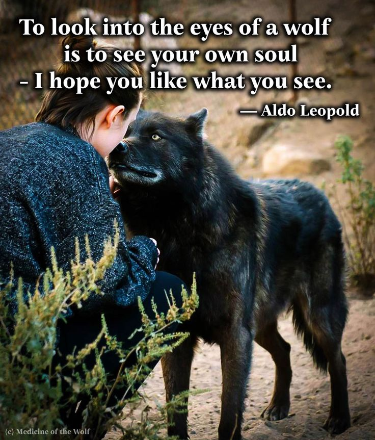 """To look into the eyes of a wolf is to see your own soul - I hope you like what you see."" — Aldo Leopold"