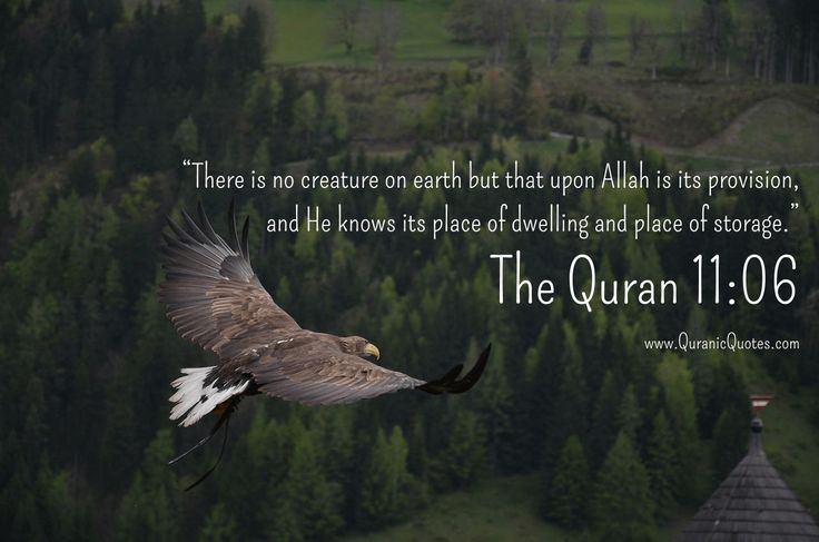 "The Quran 11:06 (Surah Hud):- ""There is no creature on earth but that upon Allah is its provision, and He knows its place of dwelling and place of storage."""