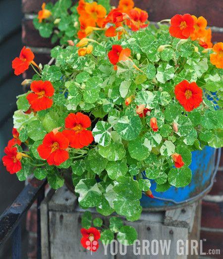 Vegetable Garden, Flower Gardening And Garden Ideas