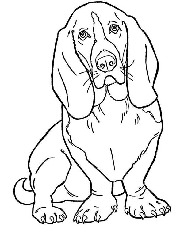 Dogs Slinky Dog Coloring Page Dog Coloring Page Animal