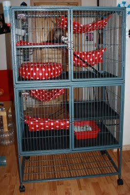 A ferret blog!: My Ferret Nation Cage
